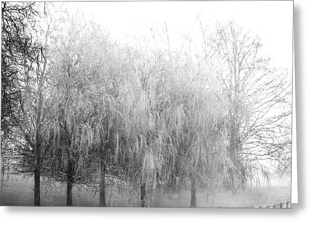 Willow Lake Greeting Cards - Weeping Willows by The lake Greeting Card by AdSpice Studios