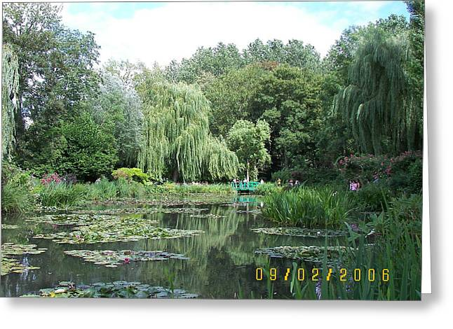 James Dolan Greeting Cards - Weeping Willows Greeting Card by James Dolan