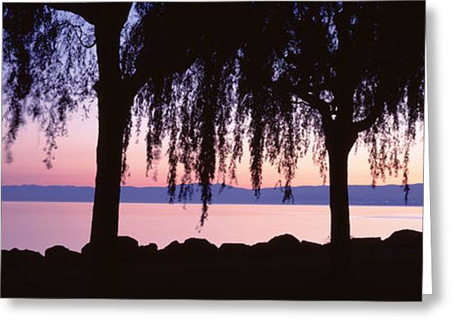 Weeping Greeting Cards - Weeping Willows, Lake Geneva, St Greeting Card by Panoramic Images