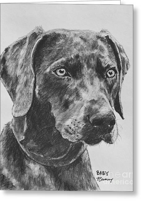 Headshot Drawings Greeting Cards - Weimaraner Drawn in Charcoal Greeting Card by Kate Sumners