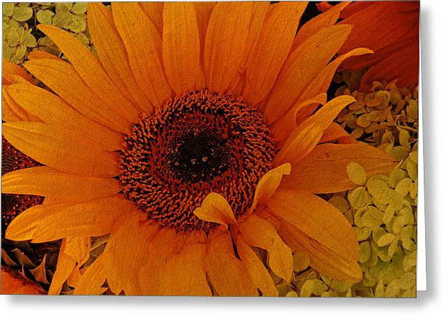 Pamela Phelps Greeting Cards - Welcome Autumn Greeting Card by Pamela Phelps