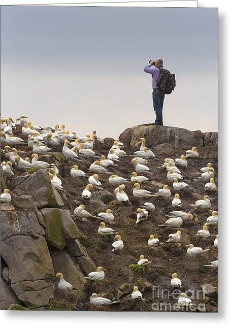 Gannet Greeting Cards - Welcome Explorers Greeting Card by Evelina Kremsdorf