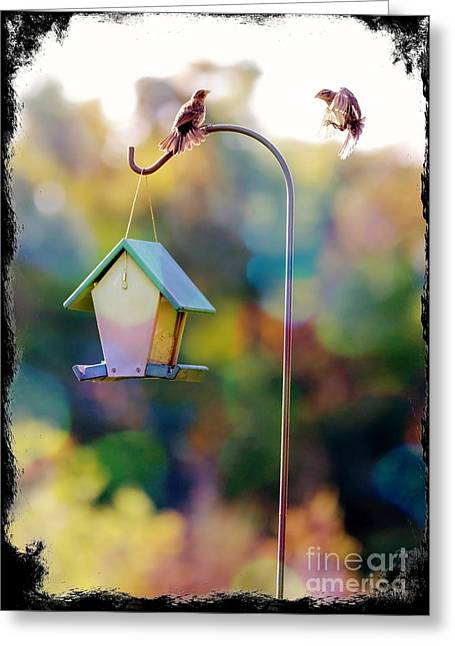 Bird-feeder Greeting Cards - Welcome Neighbor - Digital Art Greeting Card by Carol Groenen