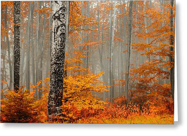 Mist Greeting Cards - Welcome to Orange Forest Greeting Card by Evgeni Dinev