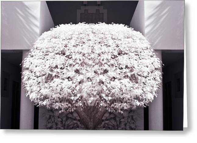 Welcome Tree Infrared Greeting Card by Adam Romanowicz