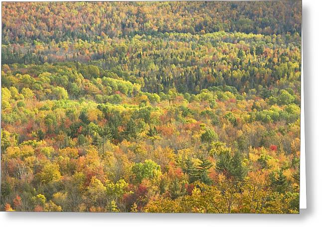 New England Wilderness Greeting Cards - Weld Maine Fall Forest In Mount Blue State Park Greeting Card by Keith Webber Jr