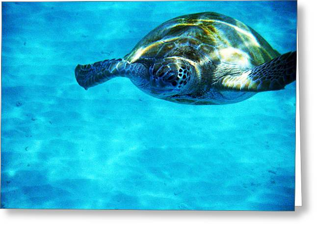 Undersea Photography Digital Art Greeting Cards - Aquatic Life Sea Turtles - Well Hello there Greeting Card by James Turnbull