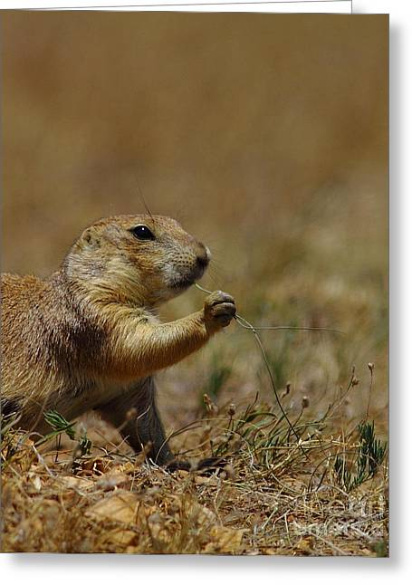Prairie Dogs Greeting Cards - Well I Reckon So Greeting Card by Robert Frederick