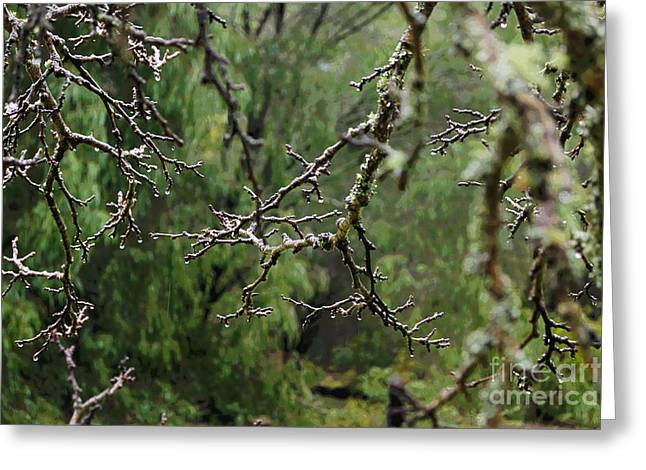 Alga Greeting Cards - Wellington Forest National Park IV Greeting Card by Cassandra Buckley