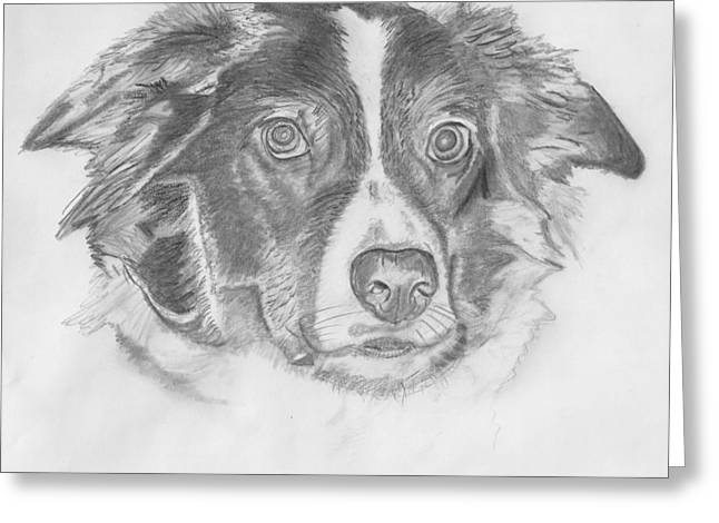 Dog Owner Drawings Greeting Cards - Welsh Border Collie Greeting Card by Catherine Roberts