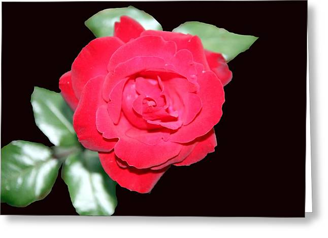 Wendy's Rose  Greeting Card by Barretreasures Photography