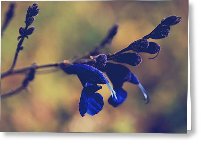 Blue Flowers Greeting Cards - Were Two of a Kind Greeting Card by Laurie Search