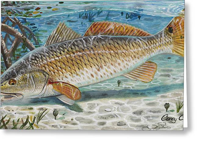 Bonefish Greeting Cards - West Coast Red Greeting Card by Carey Chen
