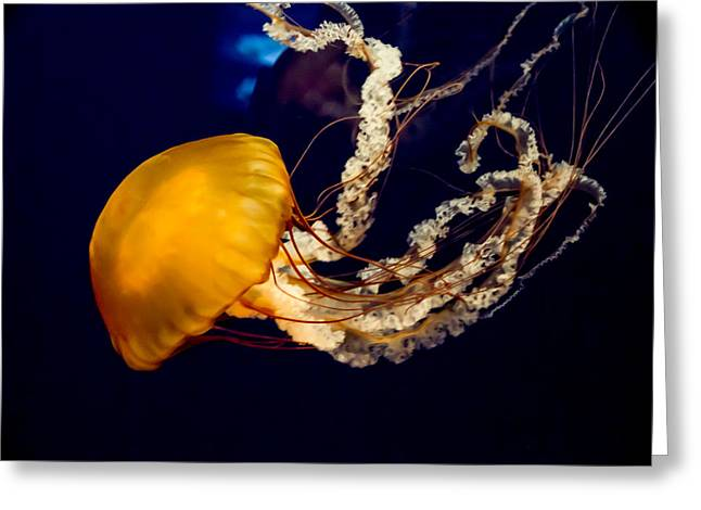 Tennessee Aquarium Greeting Cards - West Coast Sea Nettle 10 Greeting Card by Douglas Barnett