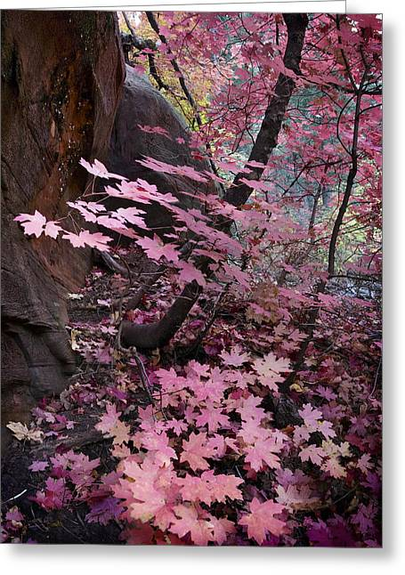Oak Creek Greeting Cards - West Fork Fall Colors Greeting Card by Dave Dilli