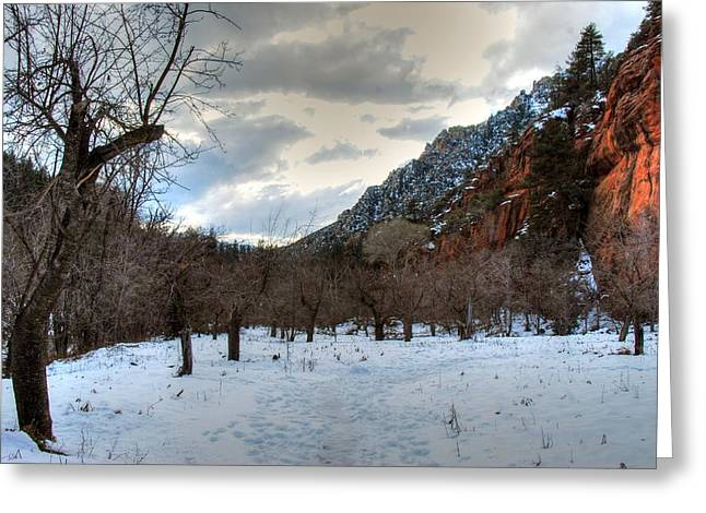 West Fork Greeting Cards - West Fork of Oak Creek Greeting Card by Tam Ryan