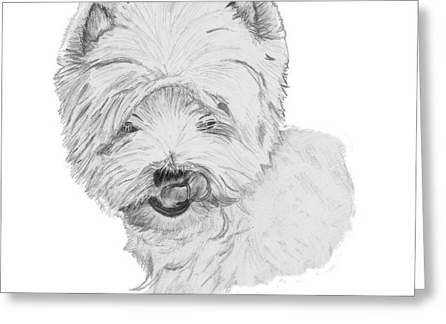 Dog Owner Drawings Greeting Cards - West Highland Terrier Drawing Greeting Card by Catherine Roberts