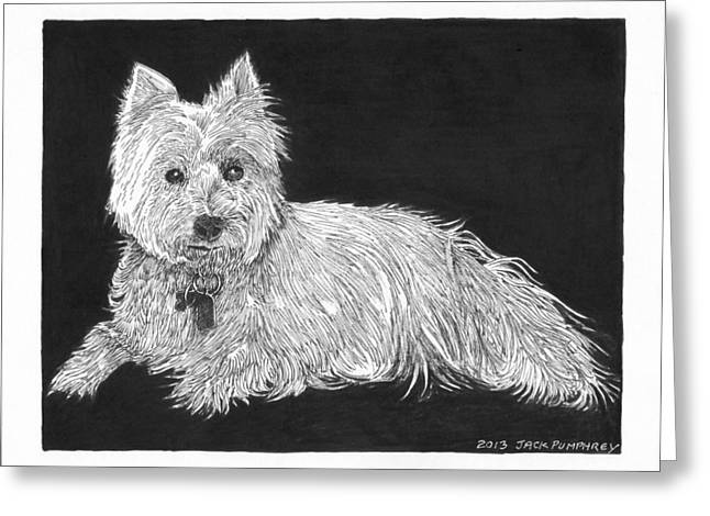 Breed Of Dog Drawings Greeting Cards - West Highland White Terrier Greeting Card by Jack Pumphrey