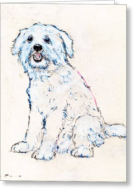 Terrier Pastels Greeting Cards - West highland white terrier Greeting Card by Kurt Tessmann
