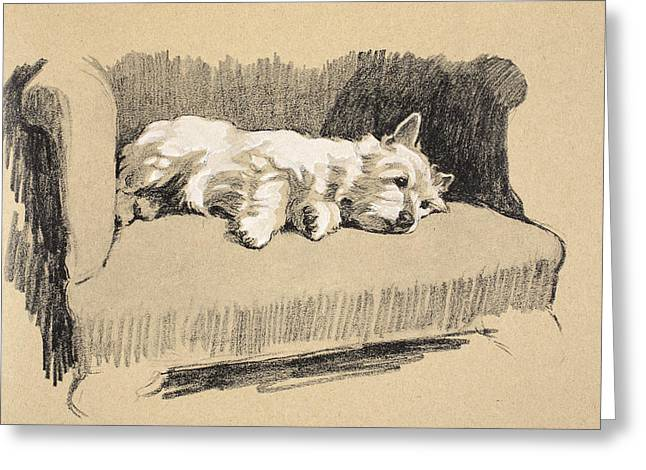 White Dogs Greeting Cards - West Highlander, 1930, Illustrations Greeting Card by Cecil Charles Windsor Aldin