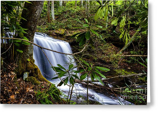 Rhododendron Maximum Greeting Cards - West Virgina Waterfall Greeting Card by Thomas R Fletcher