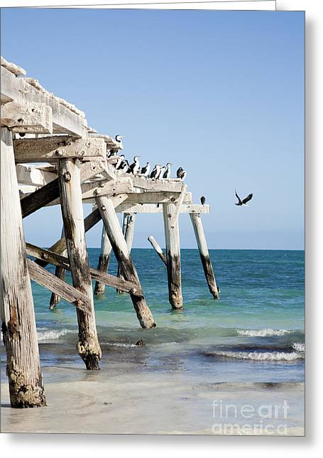 Wild Life Photographs Greeting Cards - Western Australia Eucla Old Jetty Greeting Card by Colin and Linda McKie