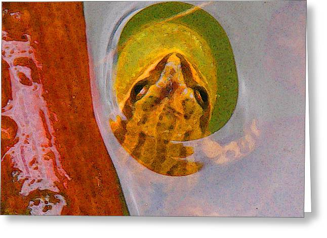 Western Chorus Frog I Greeting Card by Anastasia  Ealy
