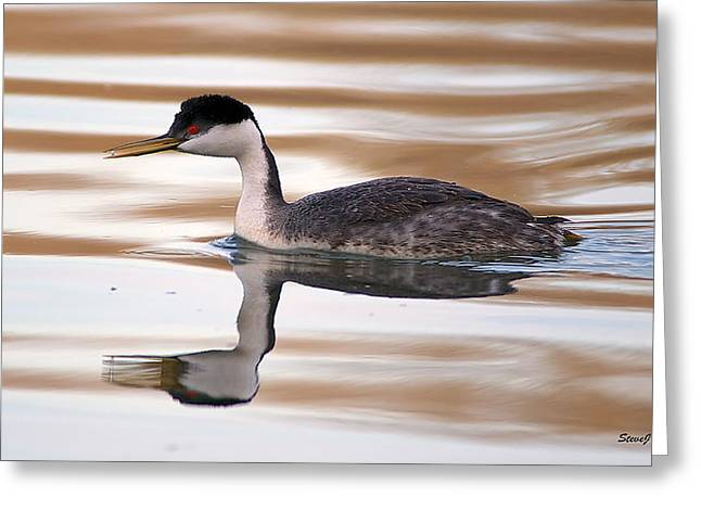 D700 Greeting Cards - Western Grebe At Chatfield Greeting Card by Stephen  Johnson