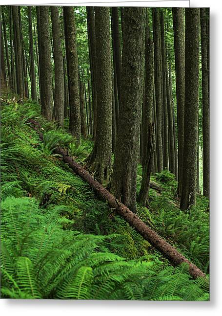 Western Hemlock Trees Grow In Oswald Greeting Card by Robert L. Potts