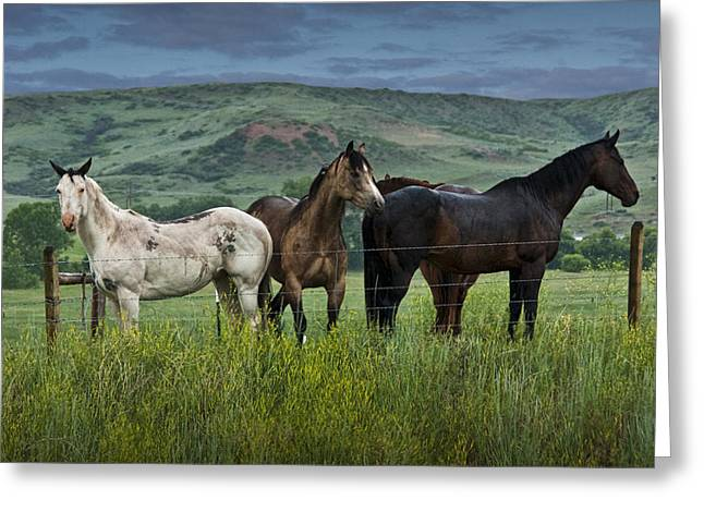Cowgirl Prints Greeting Cards - Western Horses in a Pasture No. 1187 Greeting Card by Randall Nyhof