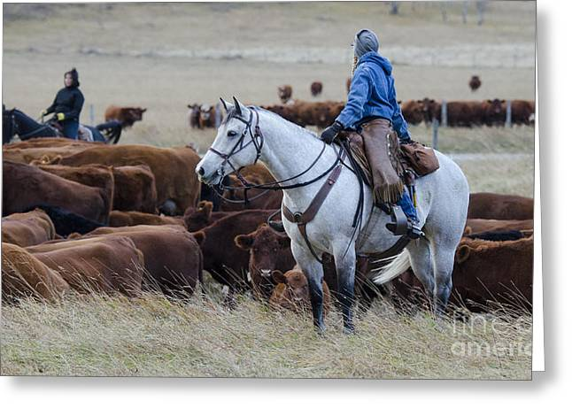 Cattle Drive Photographs Greeting Cards - Western Living 2 Greeting Card by Bob Christopher