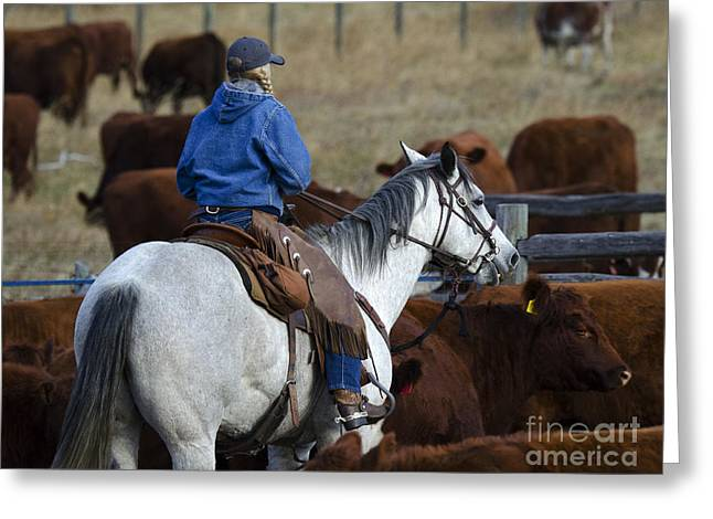 Cattle Drive Photographs Greeting Cards - Western Living 3 Greeting Card by Bob Christopher