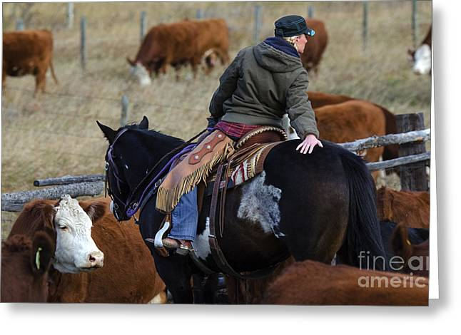 Cattle Drive Photographs Greeting Cards - Western Living 8 Greeting Card by Bob Christopher