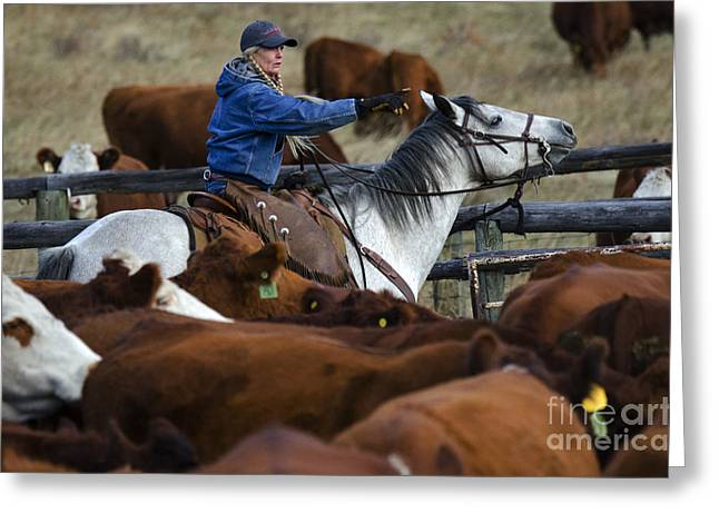 Cattle Drive Photographs Greeting Cards - Western Living 9 Greeting Card by Bob Christopher