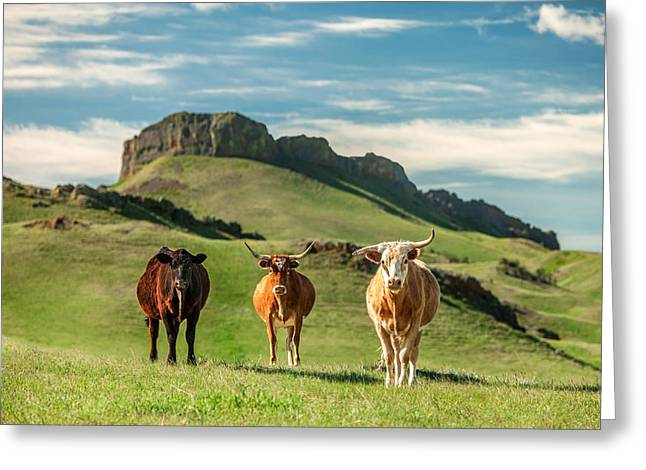 Cattle Photographs Greeting Cards - Western Longhors Greeting Card by Todd Klassy