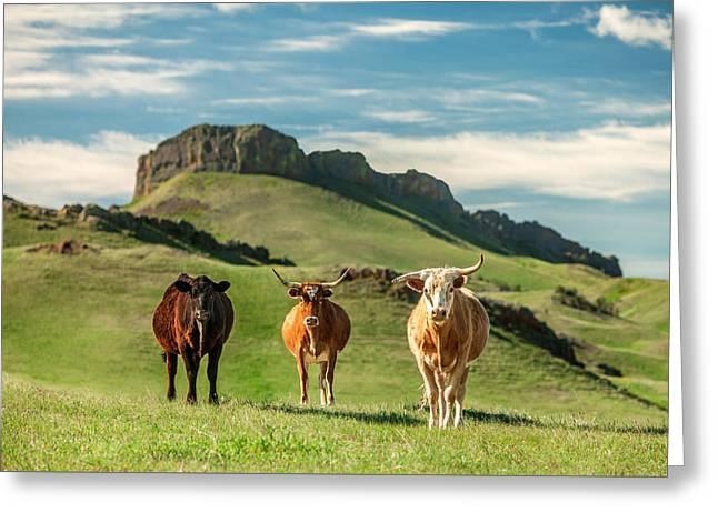 Three Cows Greeting Cards - Western Longhorns Greeting Card by Todd Klassy