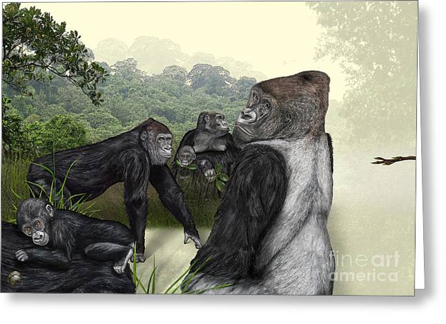 Gorilla Drawings Greeting Cards - Western Lowland Gorilla - Gorilla gorilla gorilla - Zoo interpretive panel - Gorilla Schautafel Greeting Card by Urft Valley Art