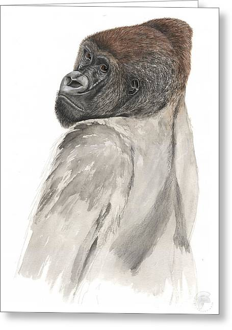 Gorilla Drawings Greeting Cards - Western Lowland Gorilla - Gorilla gorilla - Great Ape - Primate - Gorille - Gorila - Goriluapa Greeting Card by Urft Valley Art