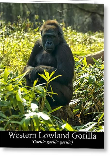 Gorilla Digital Greeting Cards - Western Lowland Gorilla sitting on a tree stump Greeting Card by Chris Flees