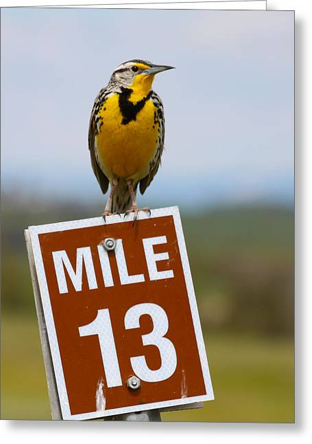Mile Marker Greeting Cards - Western Meadowlark on the Mile 13 Sign Greeting Card by Karon Melillo DeVega