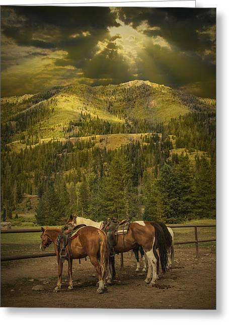 Cowgirl Prints Greeting Cards - Western saddle riding horses near Yellowstone Greeting Card by Randall Nyhof