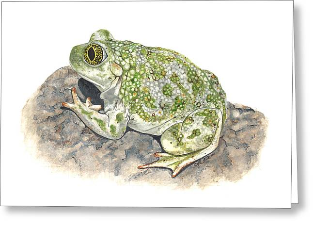Western Spadefoot Greeting Card by Cindy Hitchcock