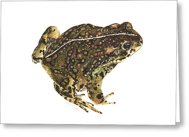 Boreas Greeting Cards - Western toad Greeting Card by Cindy Hitchcock