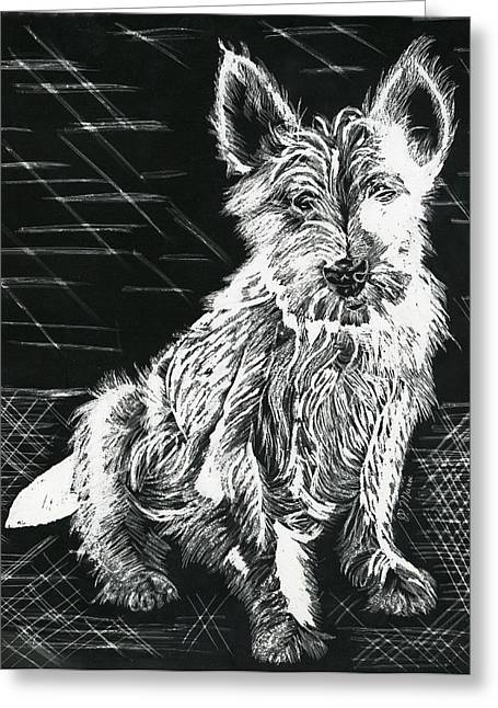 Westie Puppies Mixed Media Greeting Cards - Westie Greeting Card by Phyllis Muller
