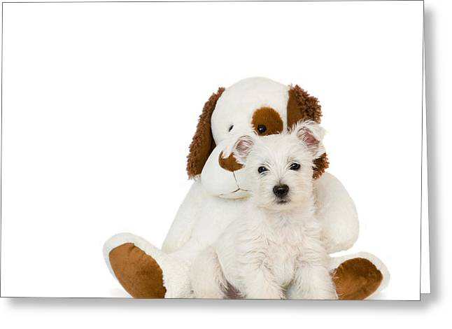 Westie Puppy And Teddy Bear Greeting Card by Natalie Kinnear