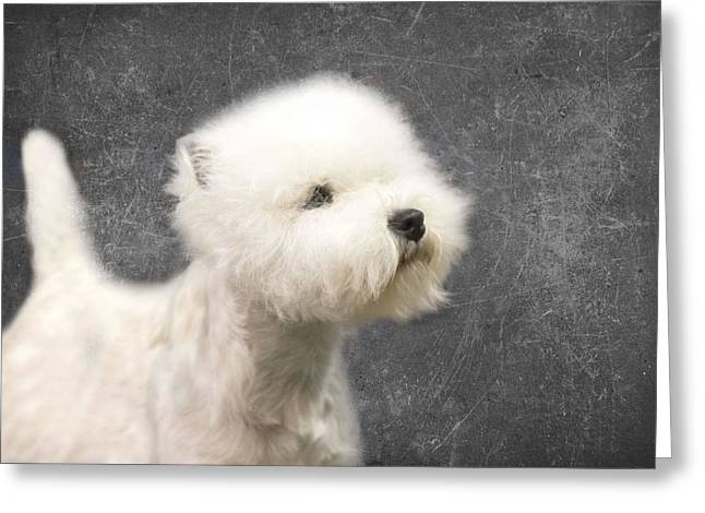 Westie Greeting Cards - Westie Greeting Card by Rebecca Cozart