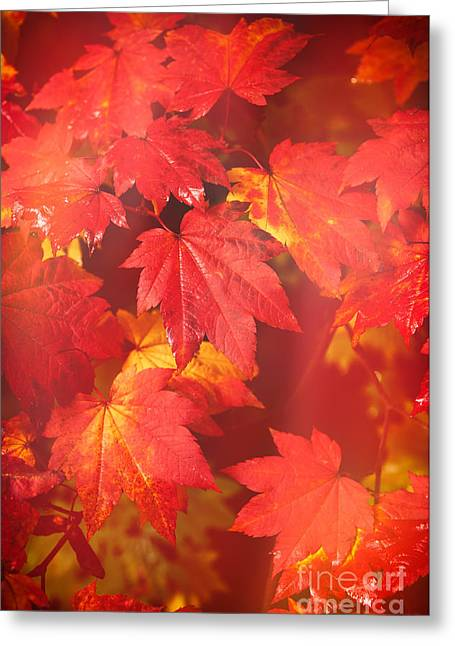 Turning Leaves Greeting Cards - Westonbirt Arboretum Abstract Greeting Card by Amanda And Christopher Elwell