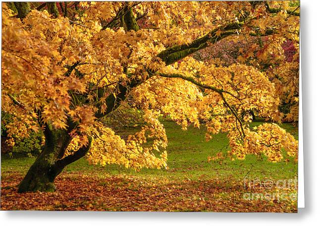 Turning Leaves Greeting Cards - Westonbirt Arboretum Greeting Card by Amanda And Christopher Elwell