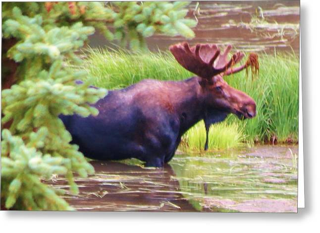 Wet And Wild Greeting Card by Feva  Fotos