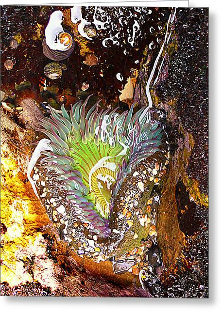 Sea Anemone Greeting Cards - Wet and Wild Greeting Card by Ron Regalado